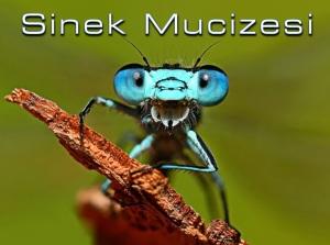 Sinek Mucizesi