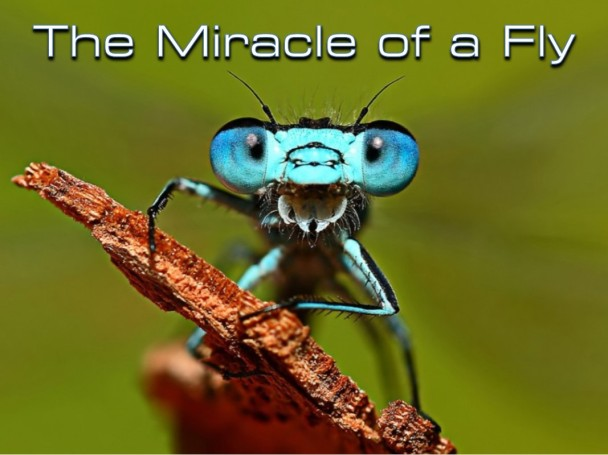 13 - The Miracle of a Fly