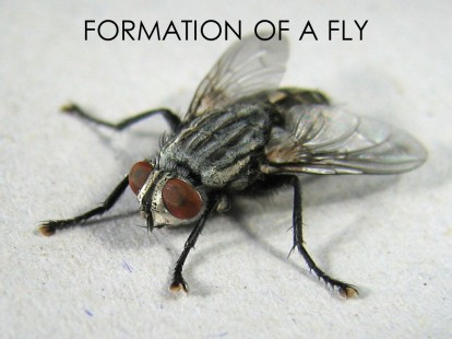 21 - The Miracle of a Fly
